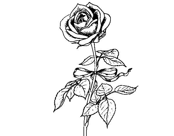Desenho de Uma rosa para Colorir