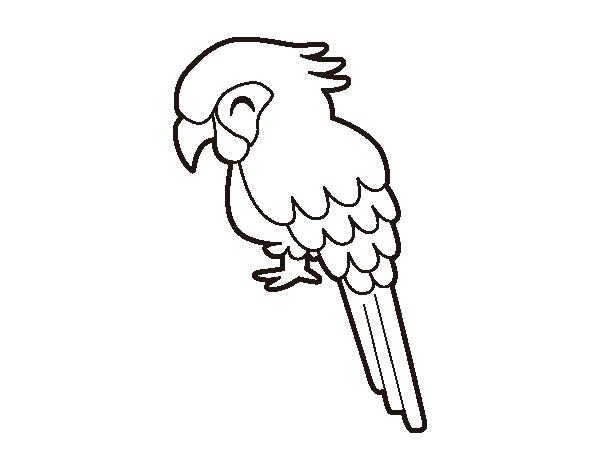 desenho de arara para colorir colorir com