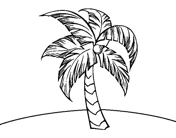 Desenho De Uma Palmeira Para Colorir Colorir Com